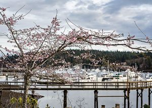 2-130217_seattle_bainbridge_001486-cymk-copy