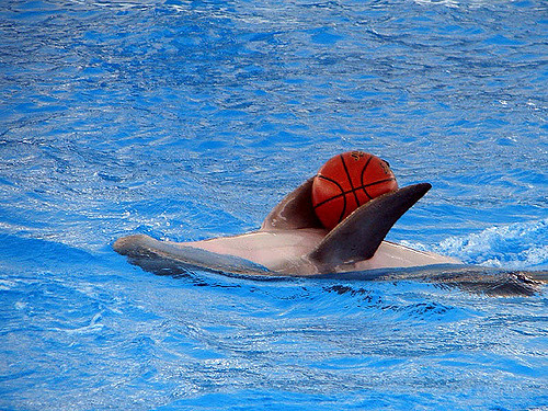 basketball or waterpolo by Hamed Saber via Flickr